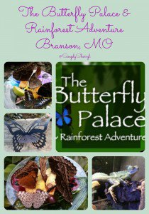 The Butterfly Palace in Branson, MO  #ExploreBranson