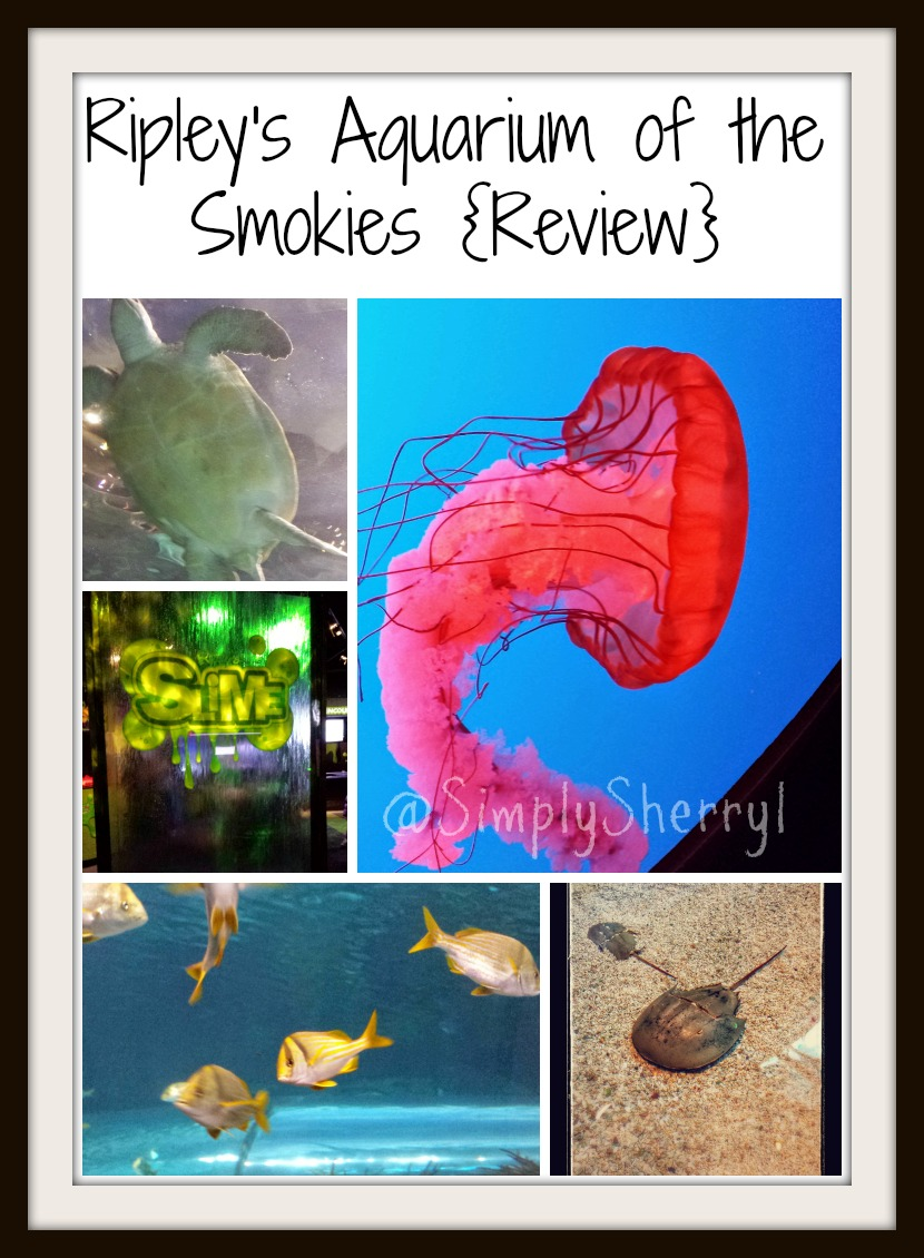 Ripley's Aquarium of the Smokies {Review}