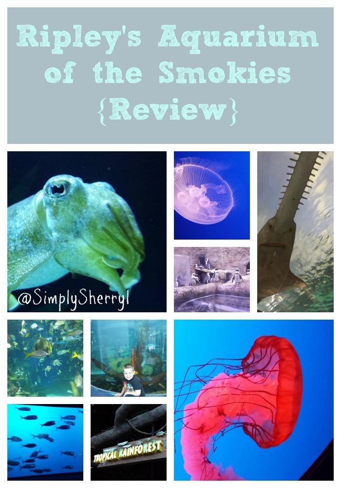 Ripley 39 S Aquarium Of The Smokies Review Simply Sherryl